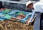 Tỷ phú nông dân tỉnh Bạc Liêu nuôi lươn không bùn công nghệ cao, 1 năm bắt bán 30 tấn, lời 2,5 tỷ đồng