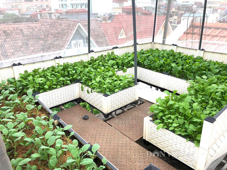 Choáng với khu vườn ngập rau xanh, quả ngọt trên sân thượng của mẹ đảm Hà thành - Ảnh 5.