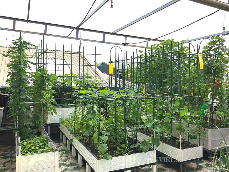 Choáng với khu vườn ngập rau xanh, quả ngọt trên sân thượng của mẹ đảm Hà thành - Ảnh 1.