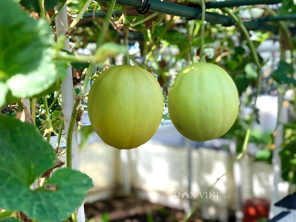 Choáng với khu vườn ngập rau xanh, quả ngọt trên sân thượng của mẹ đảm Hà thành - Ảnh 15.