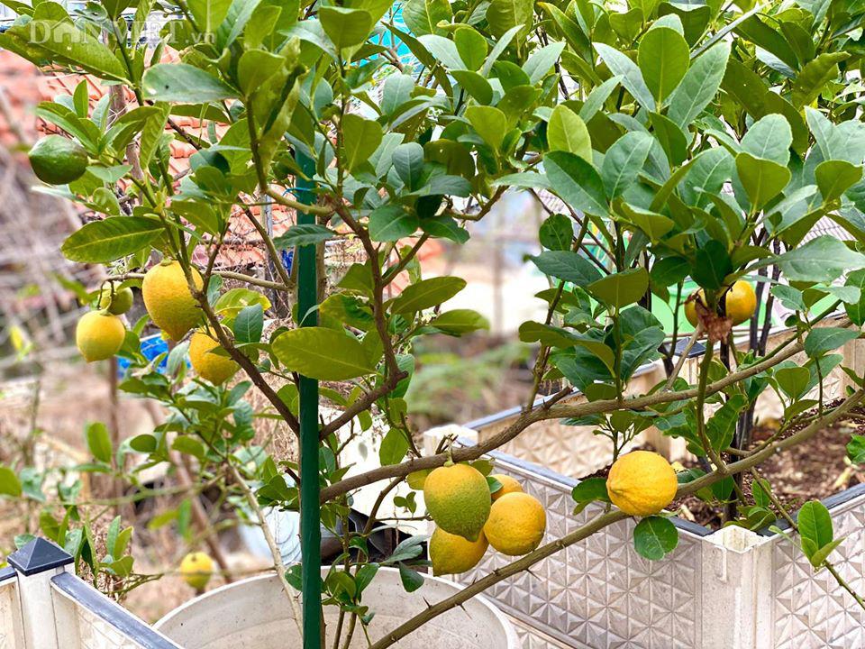 Choáng với khu vườn ngập rau xanh, quả ngọt trên sân thượng của mẹ đảm Hà thành - Ảnh 14.