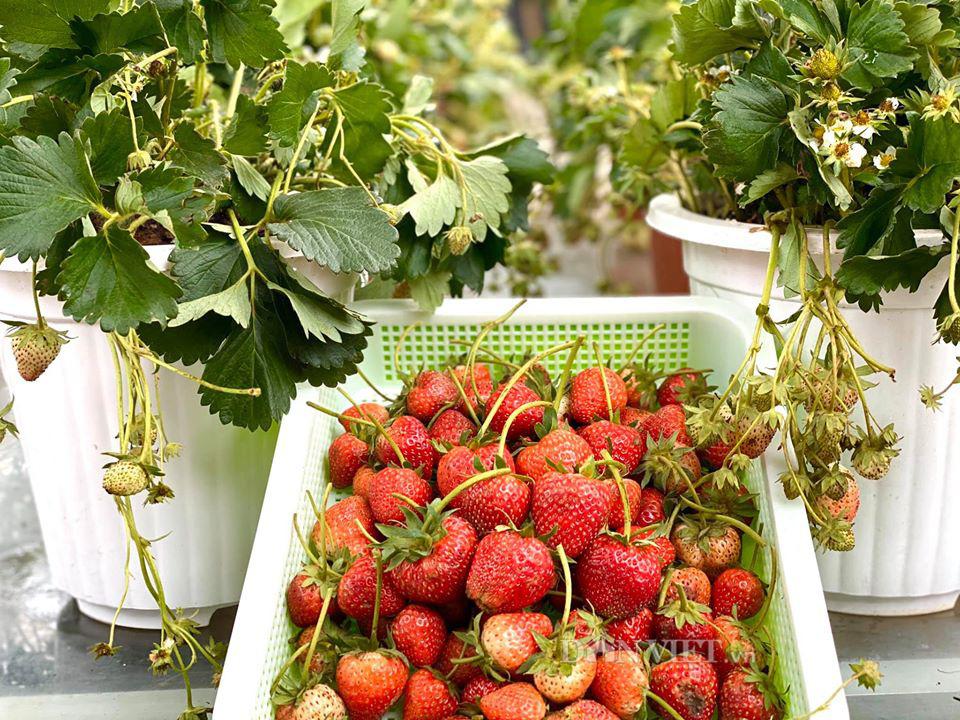Choáng với khu vườn ngập rau xanh, quả ngọt trên sân thượng của mẹ đảm Hà thành - Ảnh 16.