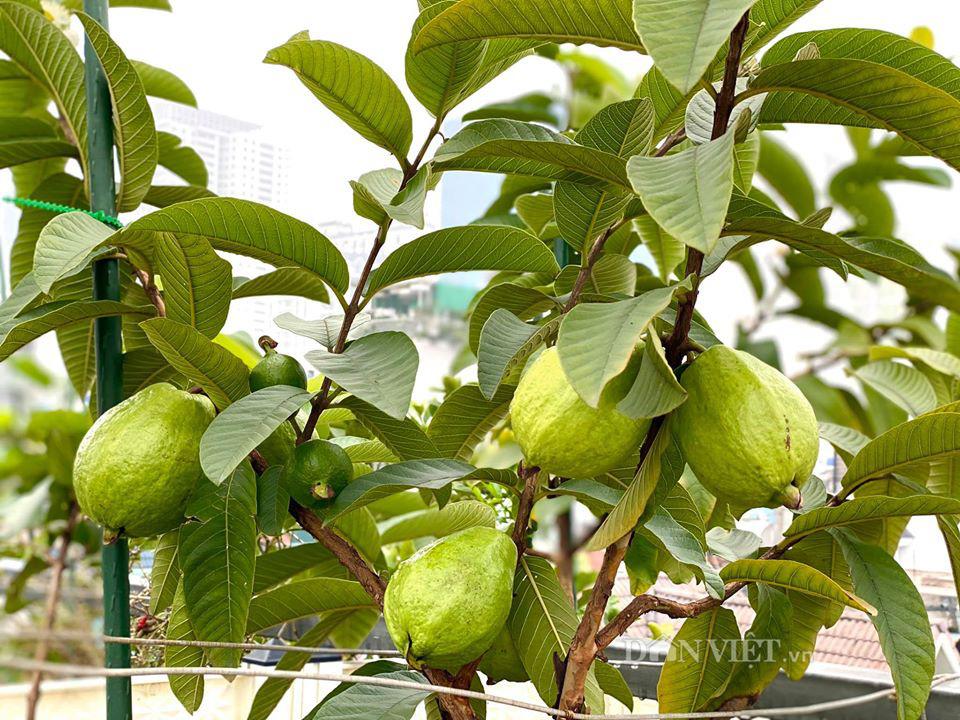 Choáng với khu vườn ngập rau xanh, quả ngọt trên sân thượng của mẹ đảm Hà thành - Ảnh 13.
