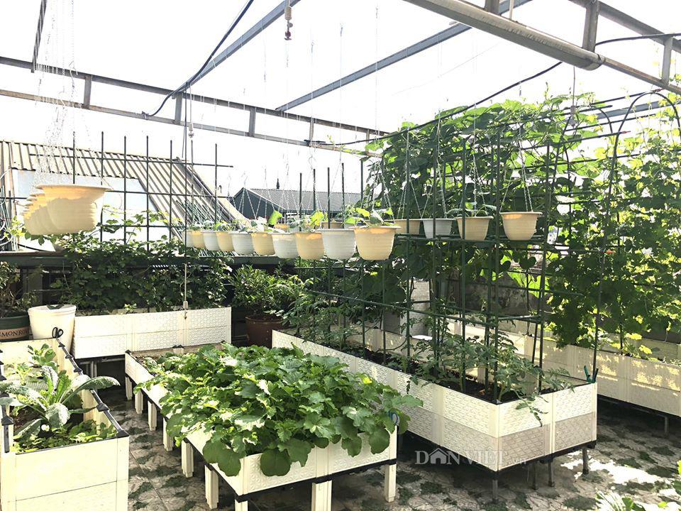 Choáng với khu vườn ngập rau xanh, quả ngọt trên sân thượng của mẹ đảm Hà thành - Ảnh 4.