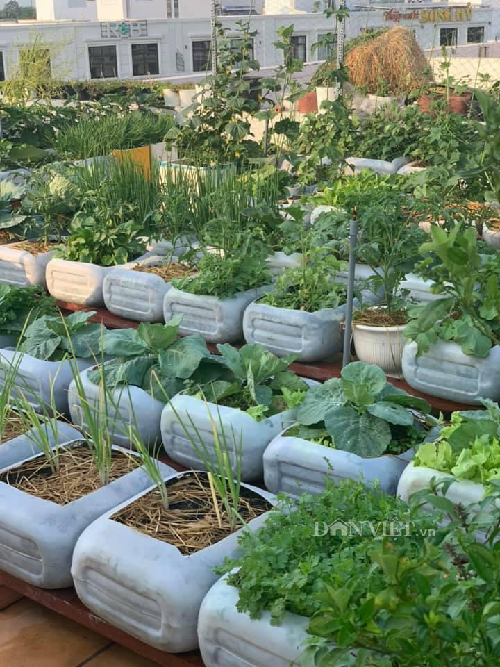 Tận dụng can nhựa mẹ đảm Cần Thơ biến sân thượng thành khu vườn xanh mát - Ảnh 8.