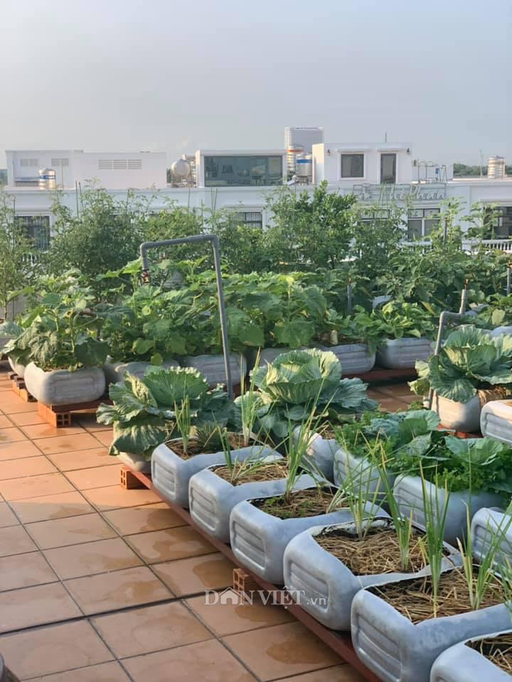Tận dụng can nhựa mẹ đảm Cần Thơ biến sân thượng thành khu vườn xanh mát - Ảnh 3.