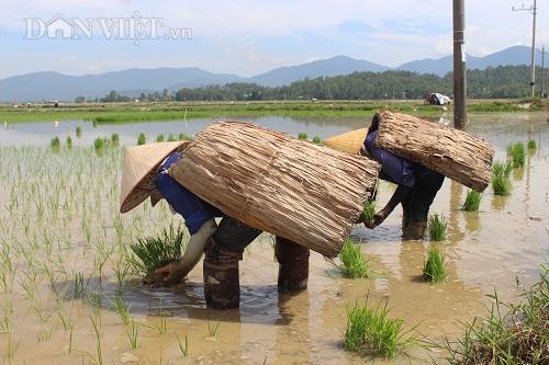 Vật dụng giúp nông dân chống lại nắng nóng gay gắt khi ra đồng - Ảnh 2.