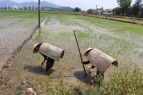 Vật dụng giúp nông dân chống lại nắng nóng gay gắt khi ra đồng - Ảnh 5.