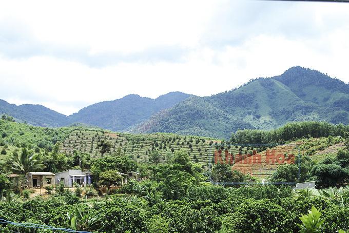 """Khánh Hoà: Đáng ngại, """"cơn sốt"""" trái cây bạc tỷ và nỗi lo mất đất rừng """"không hề nhẹ"""" - Ảnh 2."""