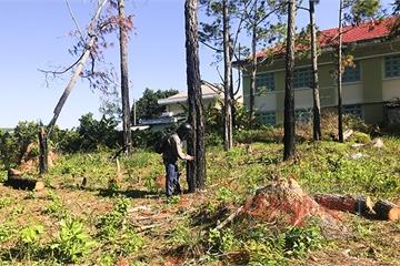 """Khánh Hoà: Sốt đất làm vườn bởi cứ trồng cây ăn quả là """"nghe đồn"""" thu bạc tỷ"""