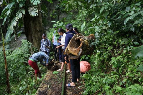 Cao Bằng: Không kém phần nguy hiểm khi dân vô rừng lấy tổ ong khoái khổng lồ to như cái mâm để làm gì? - Ảnh 1.