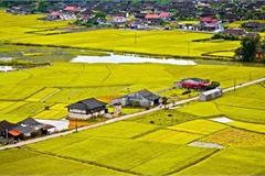 Điều kiện quan trọng để chuyển đổi đất trồng lúa sang đất ở năm 2021