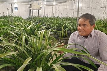 Nam Định: Vườn địa lan lớn nhất Việt Nam, sợ hết phần, khách đến tận nơi ghi tên đánh dấu