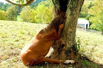 Khi cây trở thành… quái vật đáng sợ