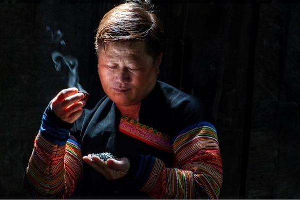 A man dedicates to producing ancient Shan Tuyet tea