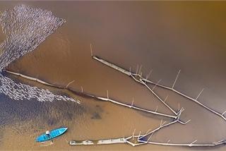 "Poetic scene in Mekong River Delta in ""floating season"""