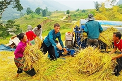 Vietnam's northern border areas in harvesting season