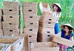 The craft of weaving water hyacinth in Bac Lieu