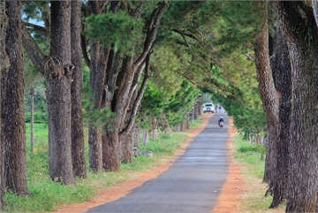 Walking on the most romantic road in Gia Lai