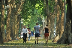 Hanoi vibrant in leaf changing season