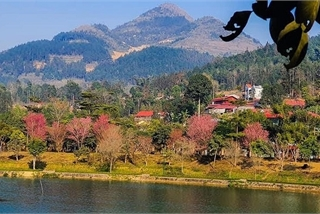 Bac Ha white plateau brilliant with spring flowers