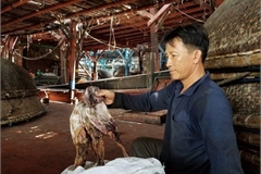 1,000 tons of squid unsalable as China changes import mode