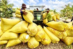 Problems plaguing rice export controls