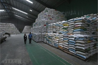 VN export sector sees growing momentum for recovery