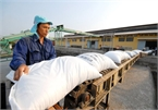 Philippine pivot does not impact on Vietnamese rice export