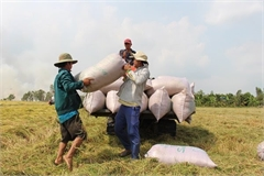 Vietnam wins deal to supply 60,000 tons of rice to the Philippines