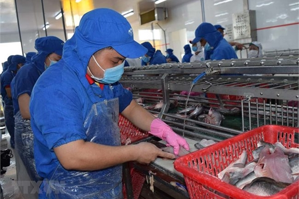 VASEP decries taxes on semi-processed and processed seafood