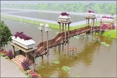 Radiant bridge in Tra Su cajuput forest