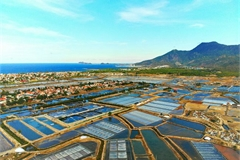 The beauty of salt fields
