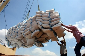 Over 200 traders licensed to export rice