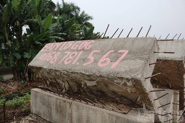 Tại khu vực Cửa Trại, xã Thủy Đường, huyện Thủy Nguyên, TP Hải Phòng xuất hiện nhan nhản các biển hiệu và số điện thoại của