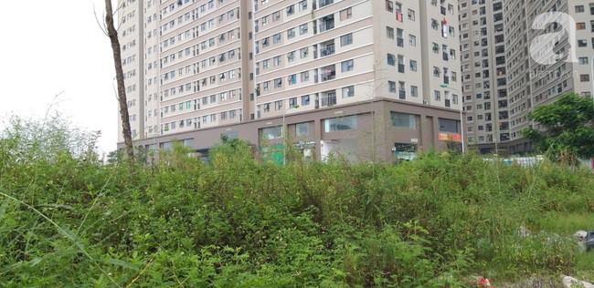 Hà Nội: Khu vui chơi chung cư bị bỏ hoang do người dân lo sợ rắn hổ mang tấn công - Ảnh 7.