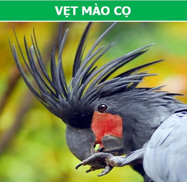 Những loài động vật kỳ lạ, giá trên trời vẫn được các đại gia săn lùng - Ảnh 3.