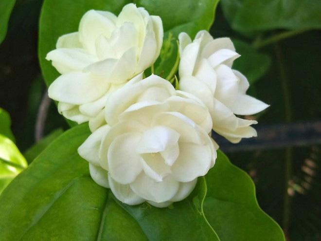 5 loại hoa đẹp đến mấy gia chủ cũng không nên đem vào nhà - Ảnh 2.