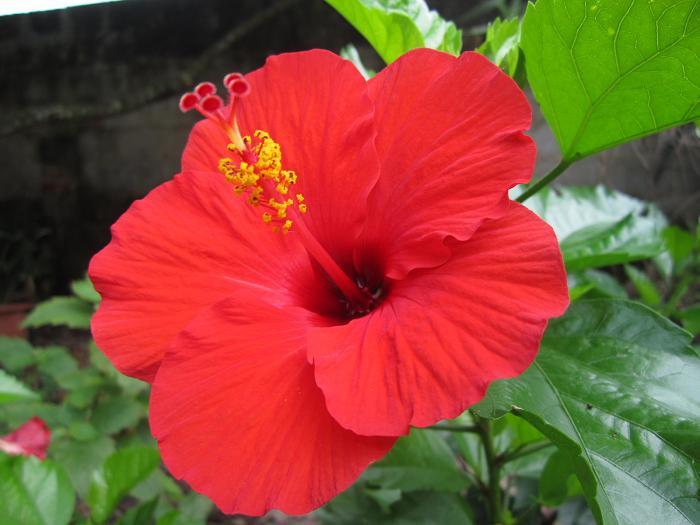 5 loại hoa đẹp đến mấy gia chủ cũng không nên đem vào nhà - Ảnh 5.