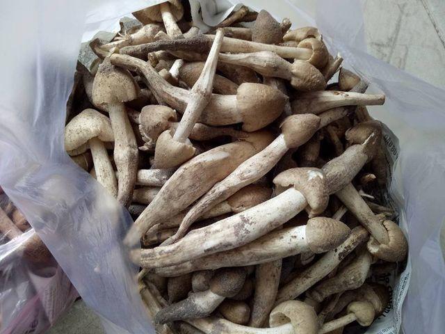 Có giá đắt ngang với giá cua hoàng đế, loại nấm này tại Việt Nam là đặc sản hiếm có khó mua - Ảnh 1.