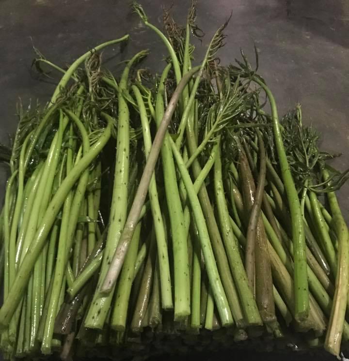 Xưa dùng để chống đói, nay trồng loại rau này không chỉ thoát nghèo mà còn kiếm tiền triệu mỗi ngày - Ảnh 3.