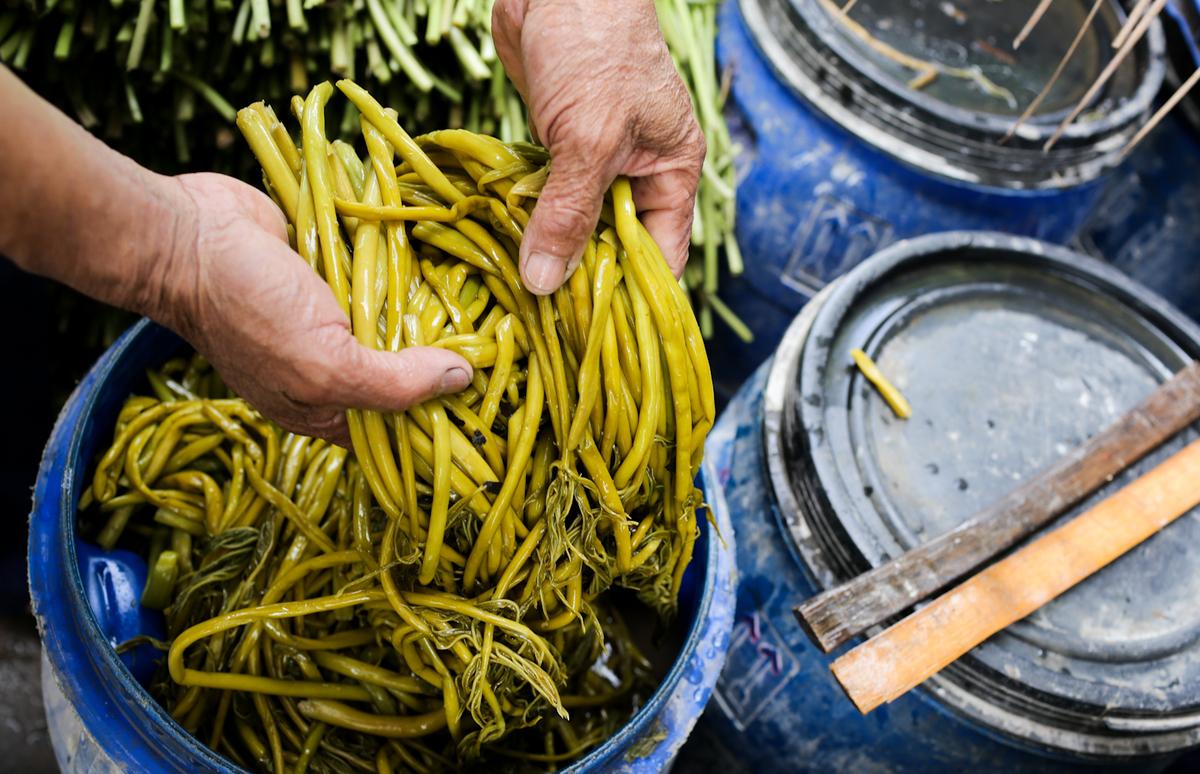 Xưa dùng để chống đói, nay trồng loại rau này không chỉ thoát nghèo mà còn kiếm tiền triệu mỗi ngày - Ảnh 4.