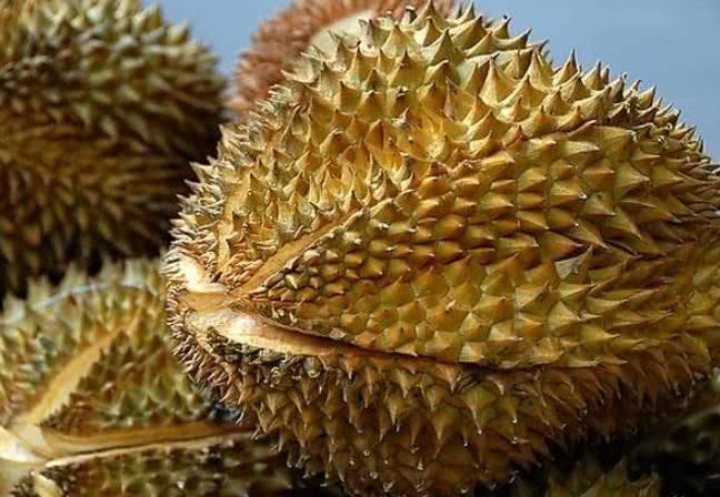 Sầu riêng đang vào mùa, đây là cách chọn sầu chuẩn ngon, không bị sượng, không dùng thuốc ép chín - Ảnh 5.
