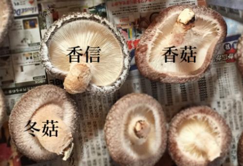Nấm hương Nhật hơn 8 triệu đồng/kg, dân Hà Nội mua về xào rau, nấu canh ăn hằng ngày - Ảnh 1.