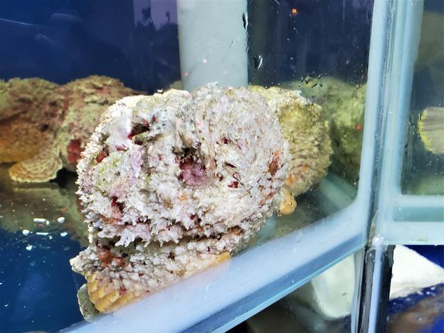 Con cá xấu xí đến kinh dị, trước làm thức ăn cho gà, vịt giờ trở thành món khoái khẩu của nhiều người - Ảnh 6.