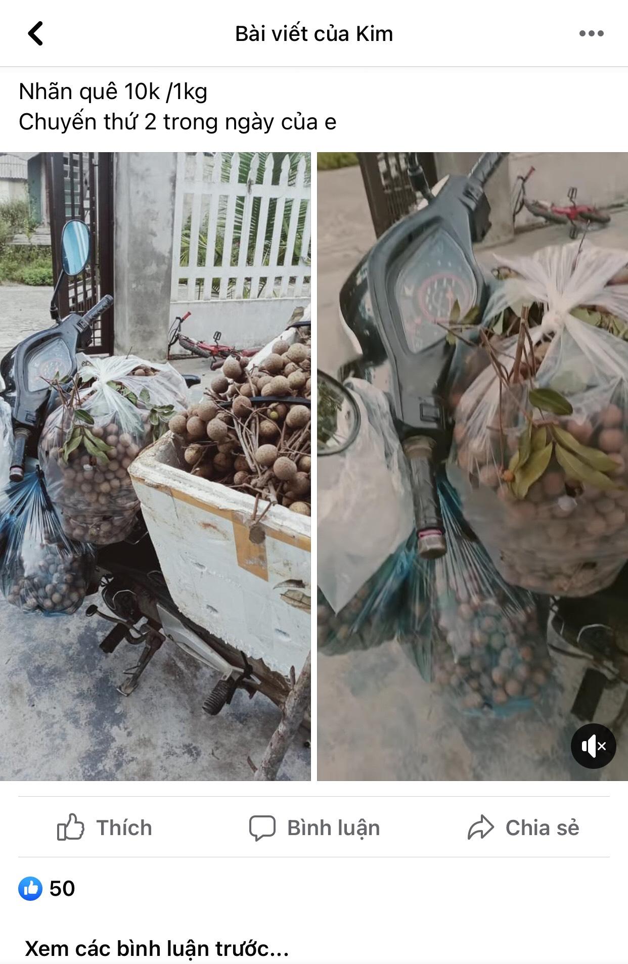 Nhãn quê chỉ 10.000 đồng/kg, chủ vườn khóc, người dân tranh thủ mua nhiều - Ảnh 3.