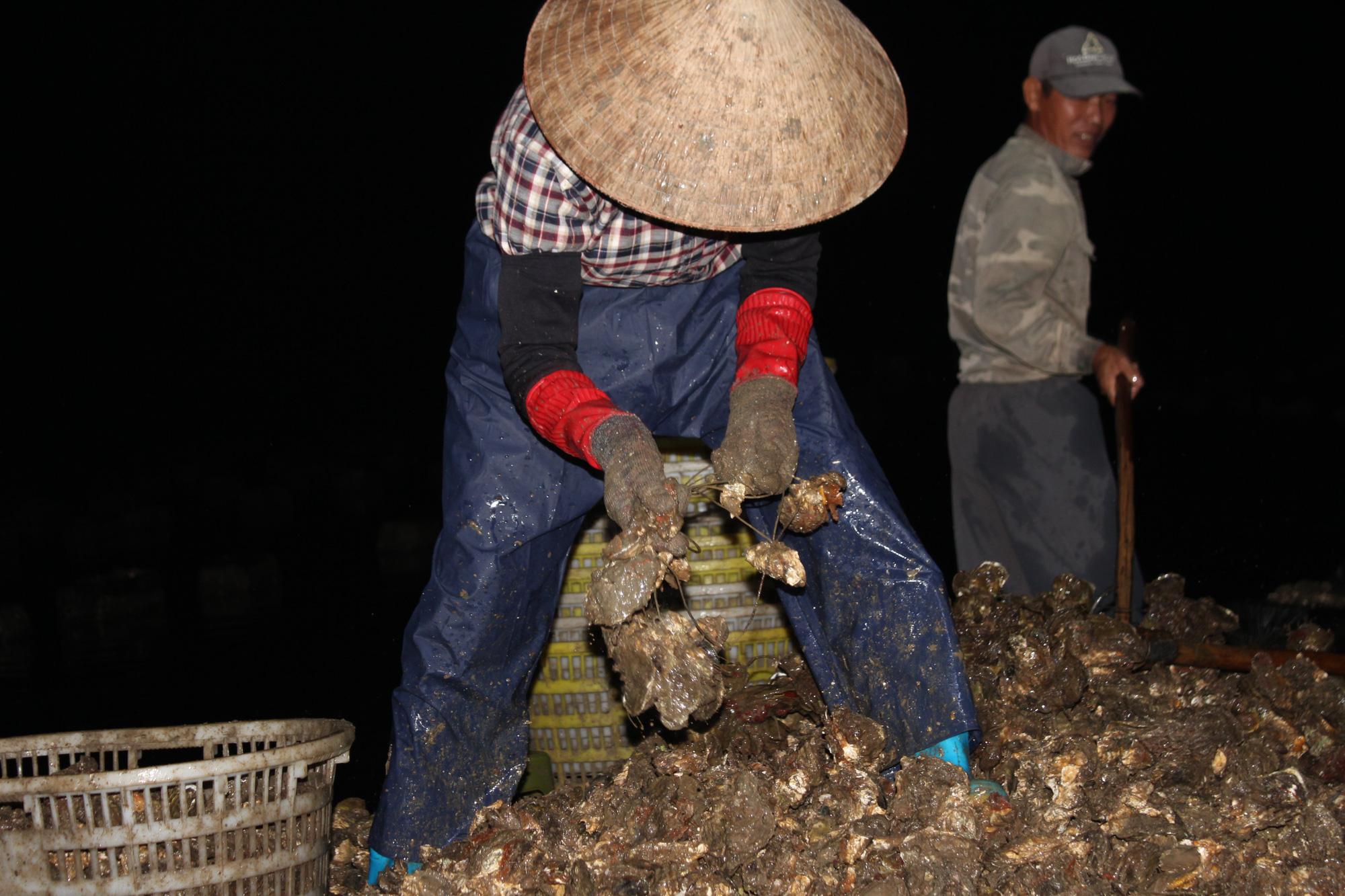 Quảng Ninh: Hàu sữa rớt giá vì dịch COVID-19, ngư dân trắng đêm thu hoạch - Ảnh 6.