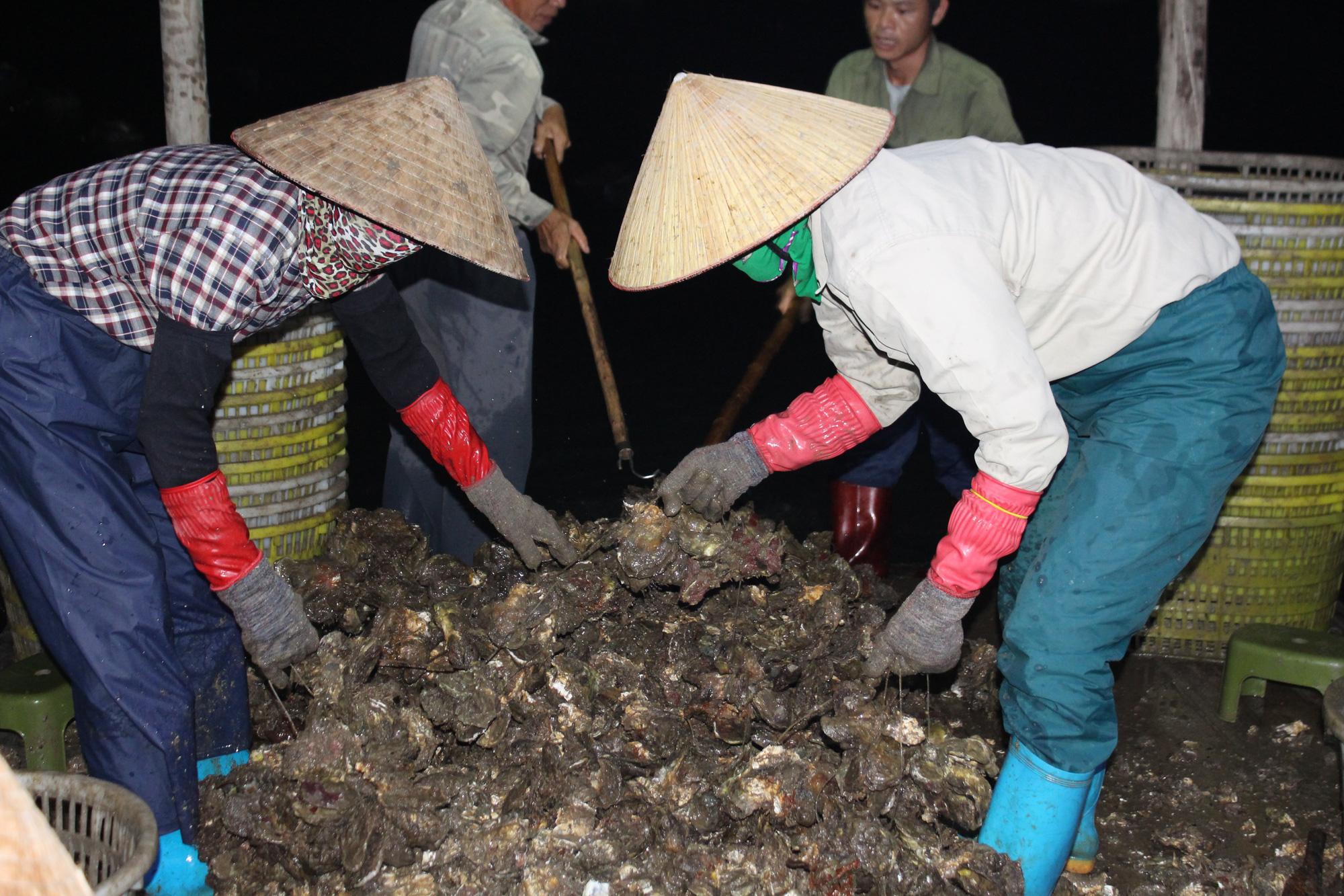 Quảng Ninh: Hàu sữa rớt giá vì dịch COVID-19, ngư dân trắng đêm thu hoạch - Ảnh 8.