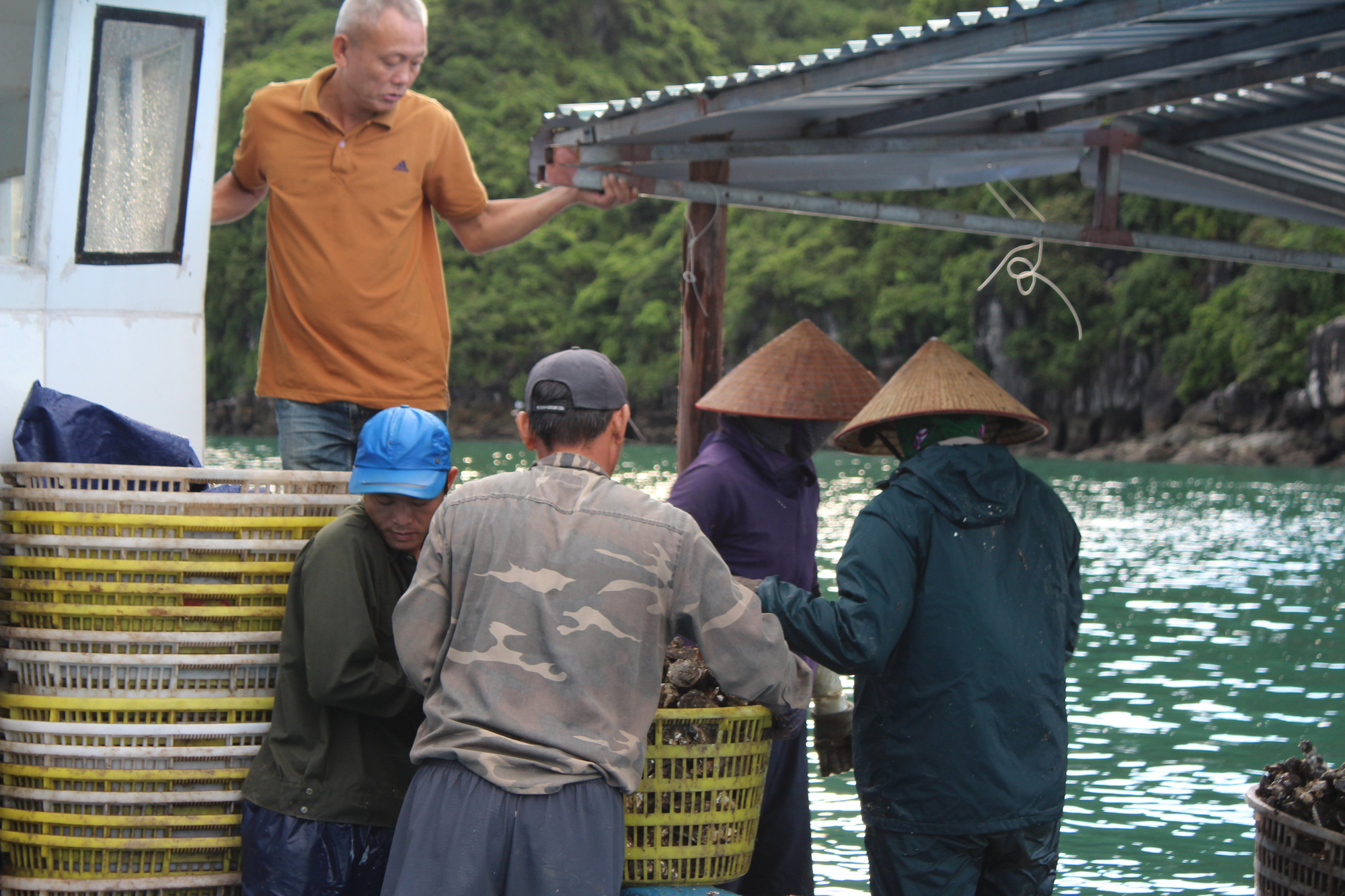 Quảng Ninh: Hàu sữa rớt giá vì dịch COVID-19, ngư dân trắng đêm thu hoạch - Ảnh 10.