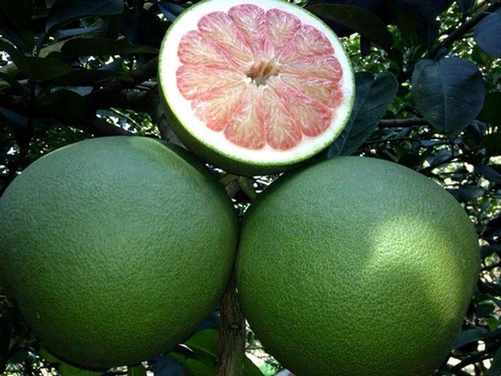 5 loại trái cây không hạt làm mưa làm gió trên thị trường - Ảnh 5.